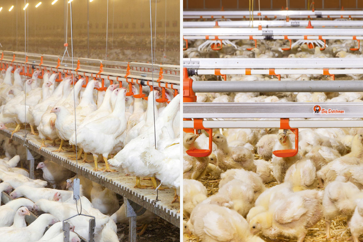 Drinking Systems | Poultry growing | Big Dutchman